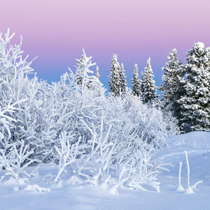 Winter Solstice Horoscope by Element