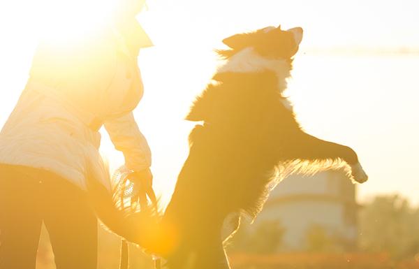 best pet by zodiac sign